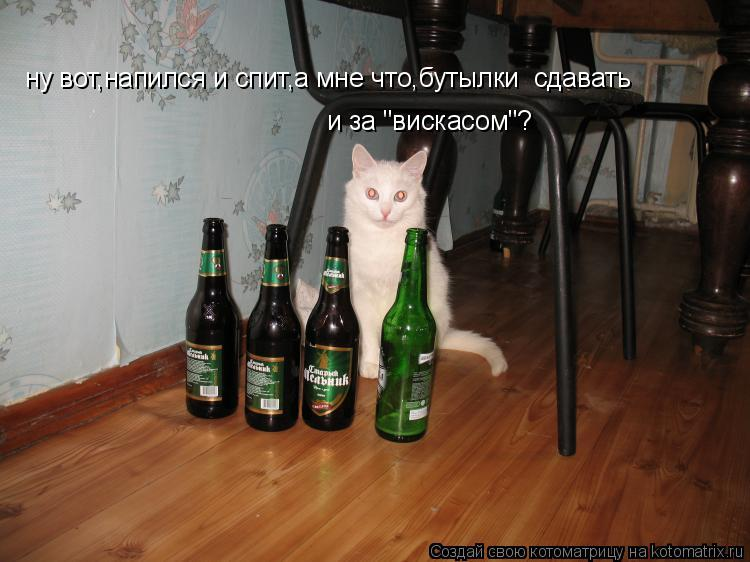"""Котоматрица: ну вот,напился и спит,а мне что,бутылки  сдавать и за """"вискасом""""?"""