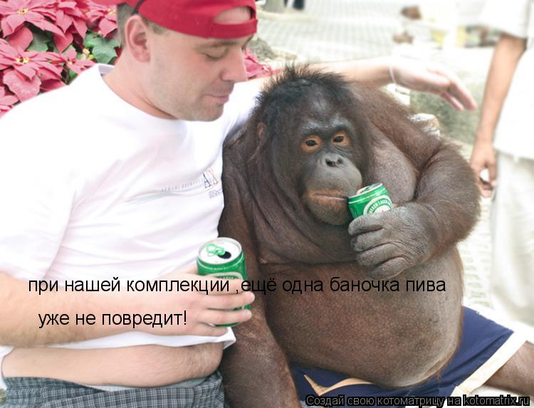 Котоматрица: при нашей комплекции ,ещё одна баночка пива уже не повредит!