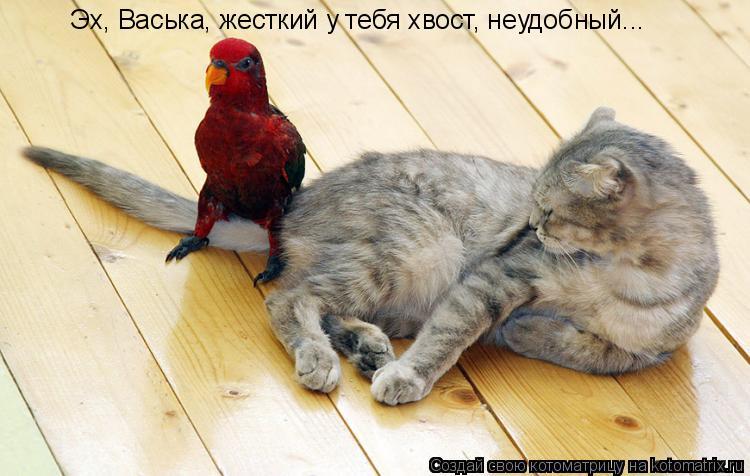 Котоматрица: Эх, Васька, жесткий у тебя хвост, неудобный...