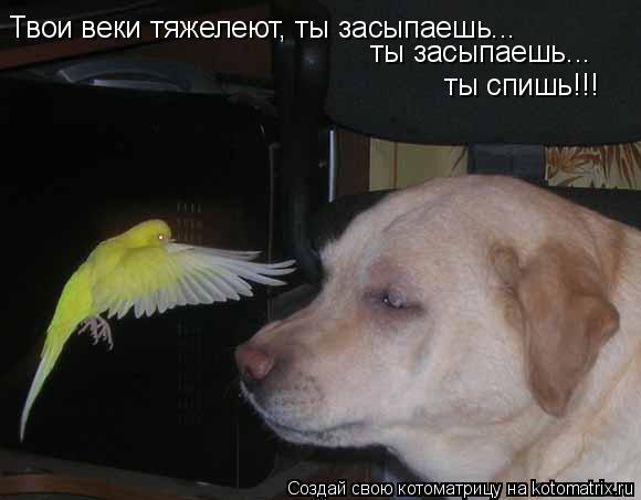 Котоматрица: Твои веки тяжелеют, ты засыпаешь...  ты засыпаешь... ты спишь!!!