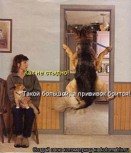 Котоматрица: Такой большой, а прививок боится! Как не стыдно!