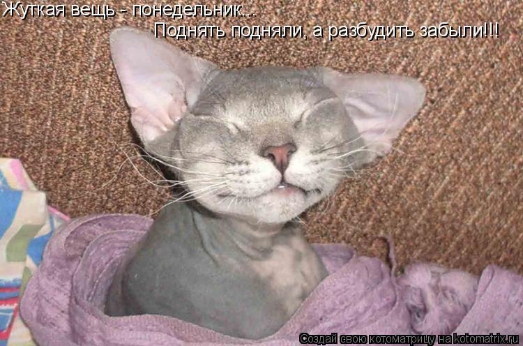 Котоматрица: Жуткая вещь - понедельник... Поднять подняли, а разбудить забыли!!!