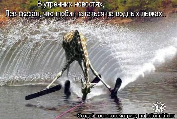 Котоматрица: Лев сказал, что любит кататься на водных лыжах.. В утренних новостях,