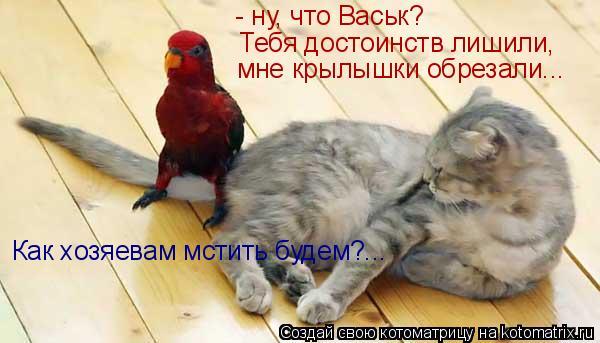 Котоматрица: - ну, что Васьк? Тебя достоинств лишили, мне крылышки обрезали... Как хозяевам мстить будем?...