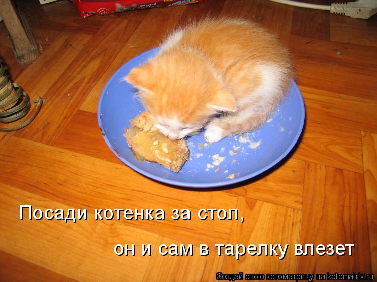 Котоматрица: Посади котенка за стол, он и сам в тарелку влезет
