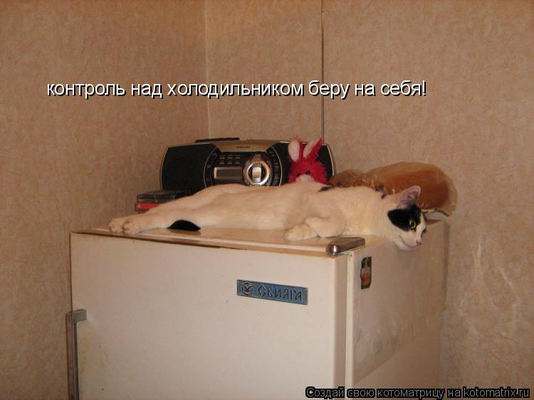Котоматрица: контроль над холодильником беру на себя!