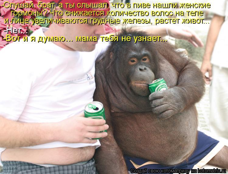 Котоматрица: -Слушай, брат, а ты слышал, что в пиве нашли женские  гормоны? Что снижается количество волос на теле  и лице,увеличиваются грудные железы, ра