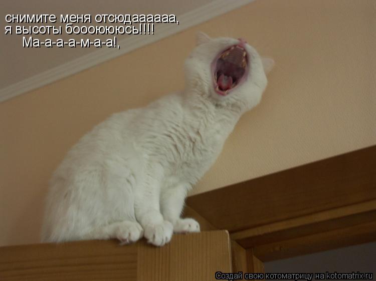 Котоматрица: снимите меня отсюдаааааа, я высоты боооюююсь!!!! Ма-а-а-а-м-а-а!,