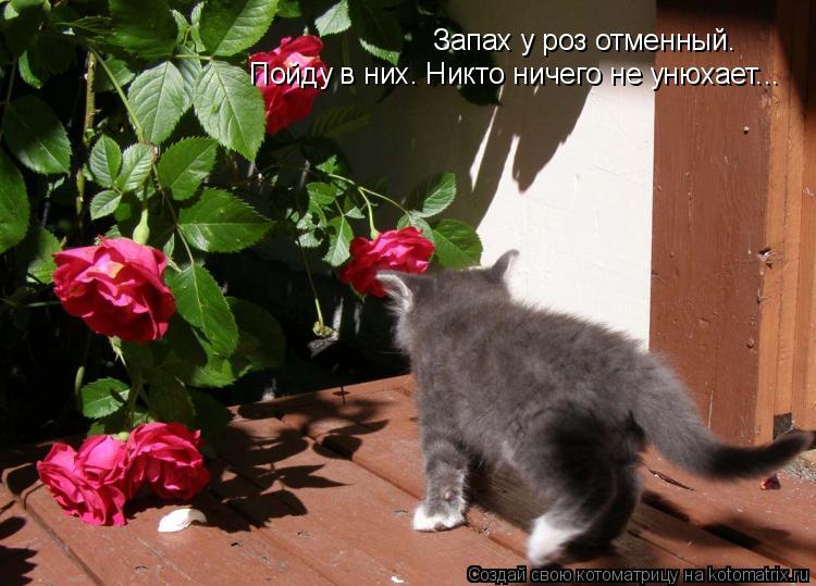 Котоматрица: Запах у роз отменный. Пойду в них. Никто ничего не унюхает...