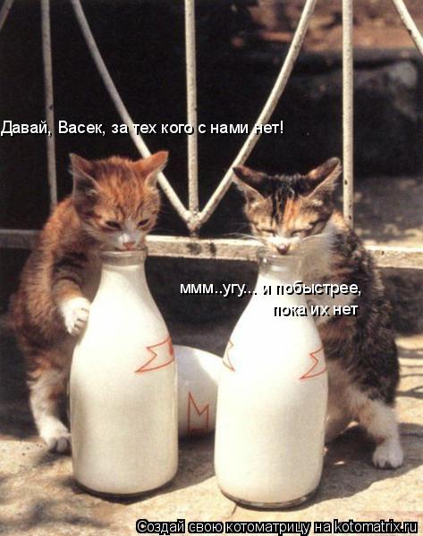 Котоматрица: Давай, Васек, за тех кого с нами нет! ммм..угу... и побыстрее,  пока их нет