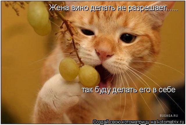 Котоматрица: Жена вино делать не разрешает...... так буду делать его в себе