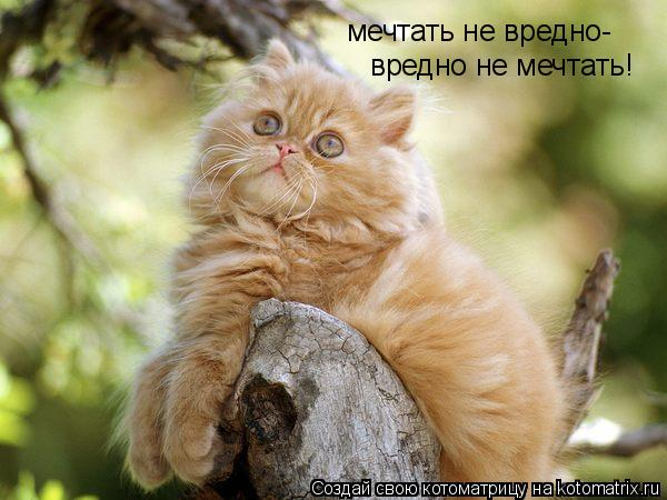 Котоматрица: мечтать не вредно- вредно не мечтать!