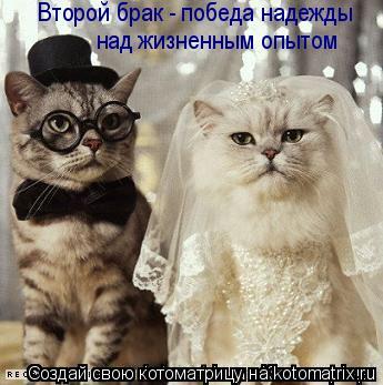 Котоматрица: Второй брак - победа надежды  над жизненным опытом