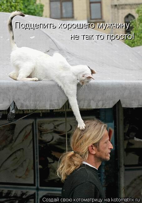 Котоматрица: Подцепить хорошего мужчину не так то просто!