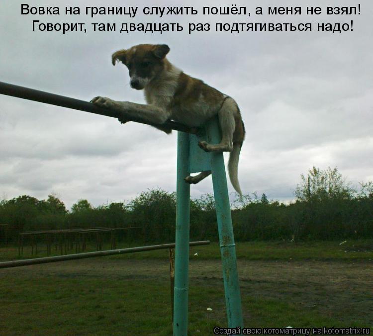 Котоматрица: Вовка на границу служить пошёл, а меня не взял! Говорит, там двадцать раз подтягиваться надо!