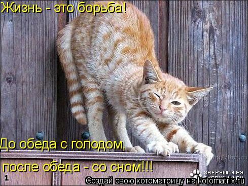 Котоматрица: Жизнь - это борьба!  До обеда с голодом, после обеда - со сном!!!