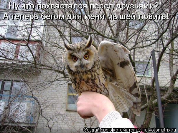 Котоматрица: Ну что похвастался перед друзьями?! А теперь бегом для меня мышей ловить!