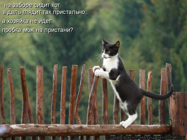 Котоматрица: на заборе сидит кот в даль глядит так пристально, а хозяйка не идет пробка мож на пристани?