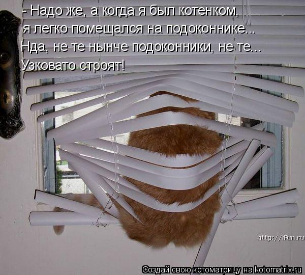 Котоматрица: - Надо же, а когда я был котенком, я легко помещался на подоконнике... Нда, не те нынче подоконники, не те... Узковато строят!