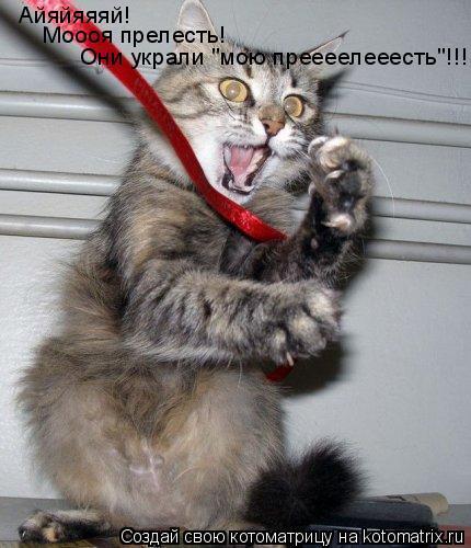 """Котоматрица: Айяйяяяй! Моооя прелесть! Они украли """"мою преееелееесть""""!!!"""