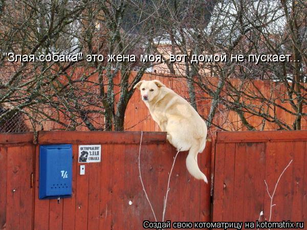 """Котоматрица: """"Злая собака"""" это жена моя, вот домой не пускает..."""