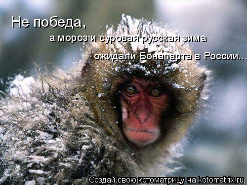 Котоматрица: Не победа,  а мороз и суровая русская зима  ожидали Бонапарта в России...