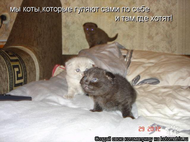 Котоматрица: мы коты,которые гуляют сами по себе  и там,где хотят!