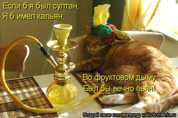 Котоматрица: Если б я был султан, Я б имел кальян, Во фруктовом дыму Был бы вечно пьян!