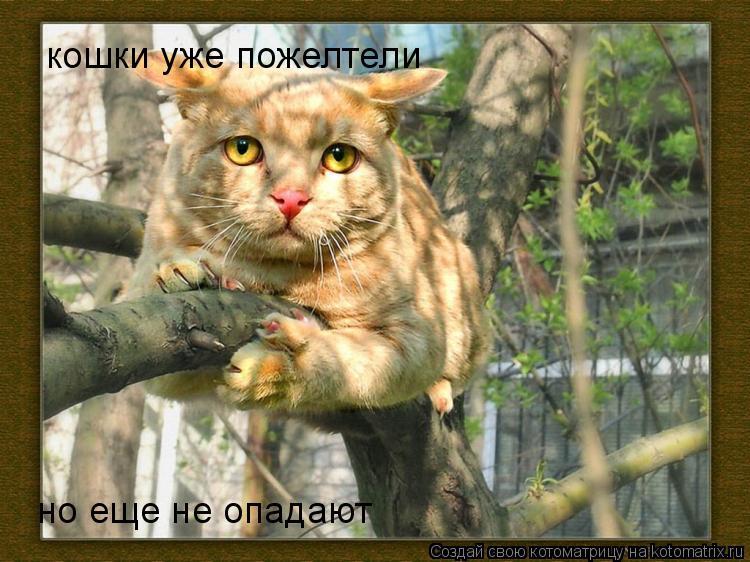 Котоматрица: кошки уже пожелтели но еще не опадают