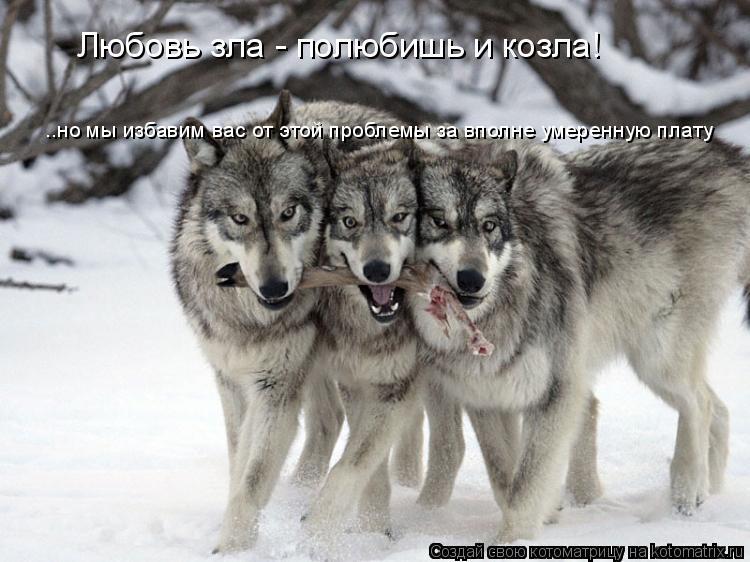 Котоматрица: Любовь зла - полюбишь и козла! ..но мы избавим вас от этой проблемы за вполне умеренную плату