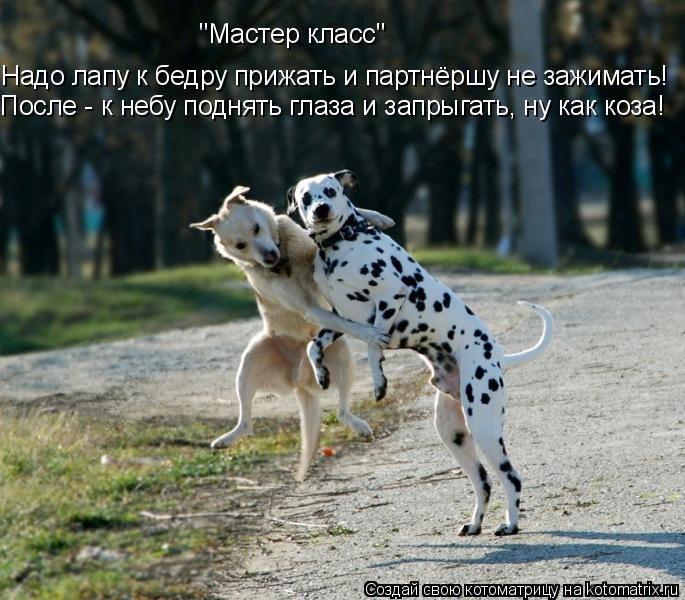"""Котоматрица: Надо лапу к бедру прижать и партнёршу не зажимать! После - к небу поднять глаза и запрыгать, ну как коза!  """"Мастер класс"""""""