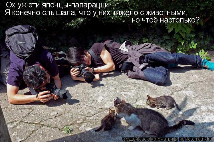 Котоматрица: Ох уж эти японцы-папарацци...  Я конечно слышала, что у них тяжело с животными,  но чтоб настолько?