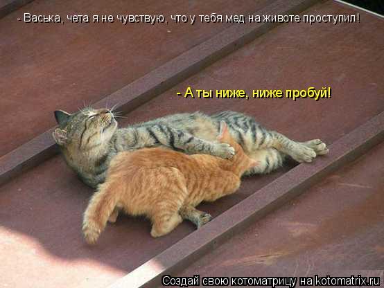 Котоматрица: - Васька, чета я не чувствую, что у тебя мед на животе проступил! - А ты ниже, ниже пробуй!