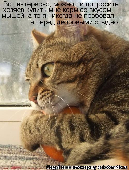 Котоматрица: Вот интересно, можно ли попросить  хозяев купить мне корм со вкусом  мышей, а то я никогда не пробовал,  а перед дворовыми стыдно...