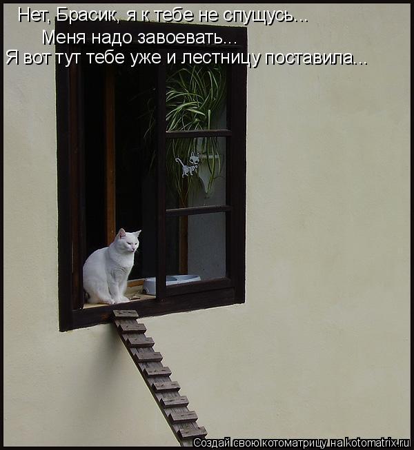 Котоматрица: Нет, Брасик, я к тебе не спущусь...  Меня надо завоевать...  Я вот тут тебе уже и лестницу поставила...