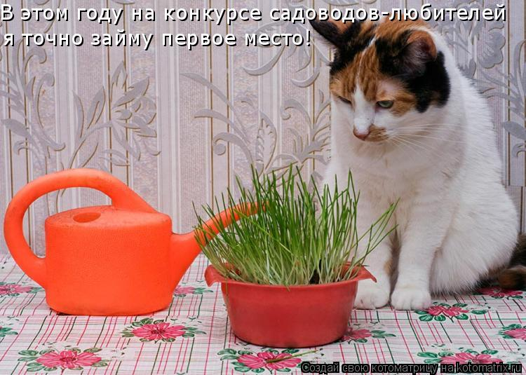 Котоматрица: В этом году на конкурсе садоводов-любителей  я точно займу первое место!