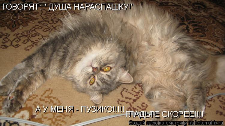 "Котоматрица: ГОВОРЯТ: "" ДУША НАРАСПАШКУ!"" А У МЕНЯ - ПУЗИКО!!!!! ГЛАДЬТЕ СКОРЕЕ!!!!"