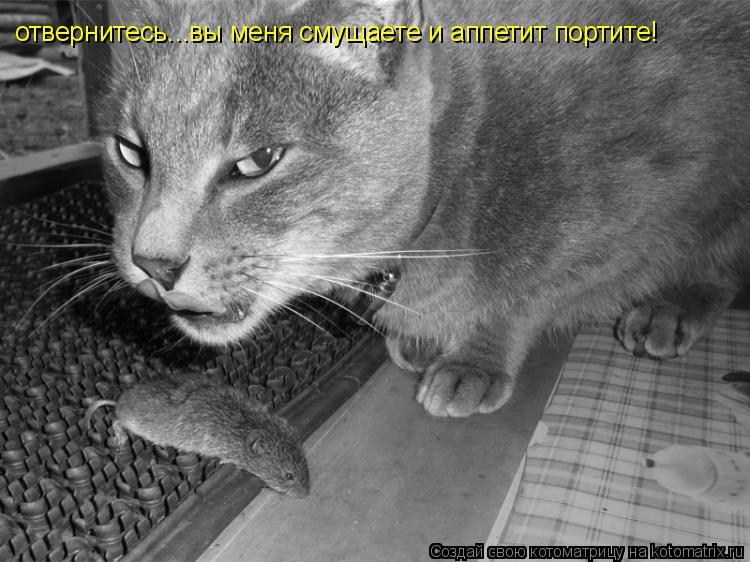 Котоматрица: отвернитесь...вы меня смущаете и аппетит портите!