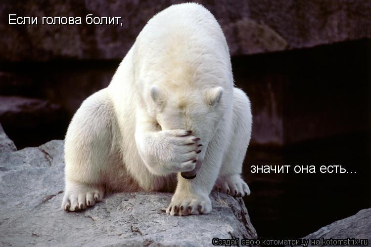 Котоматрица: Если голова болит, значит она есть...