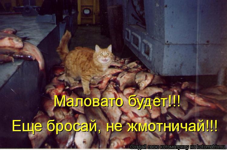 Котоматрица: Маловато будет!!!  Еще бросай, не жмотничай!!!