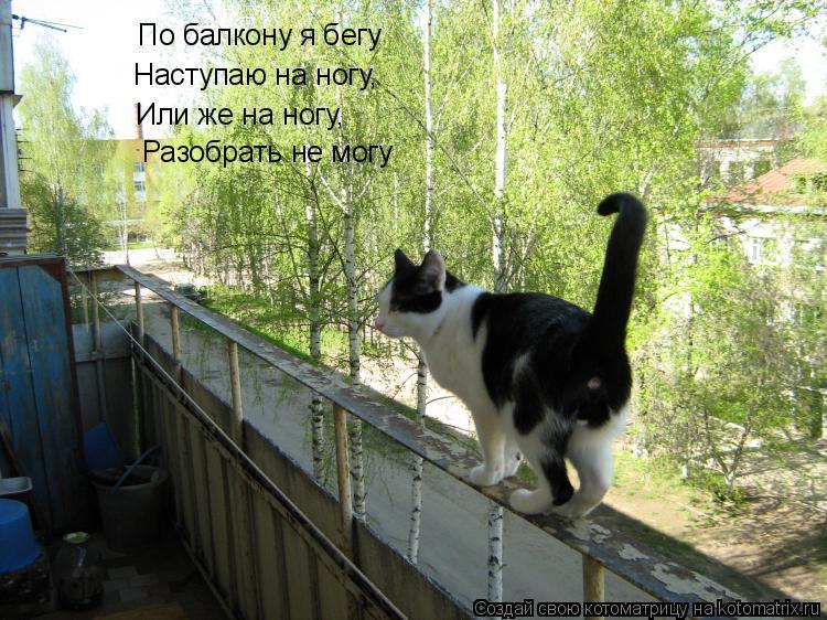 Котоматрица: По балкону я бегу Наступаю на ногу, Или же на ногу, Разобрать не могу
