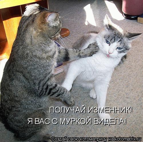 Котоматрица: ПОЛУЧАЙ ИЗМЕННИК! Я ВАС С МУРКОЙ ВИДЕЛА!