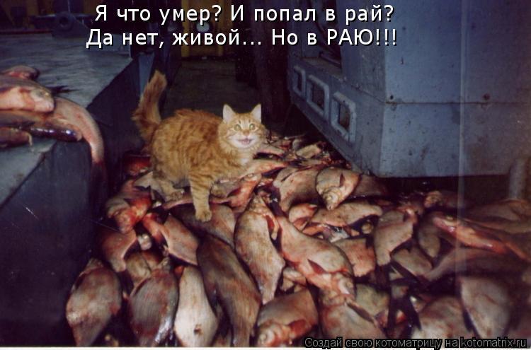 Котоматрица: Я что умер? И попал в рай?  Да нет, живой... Но в РАЮ!!!