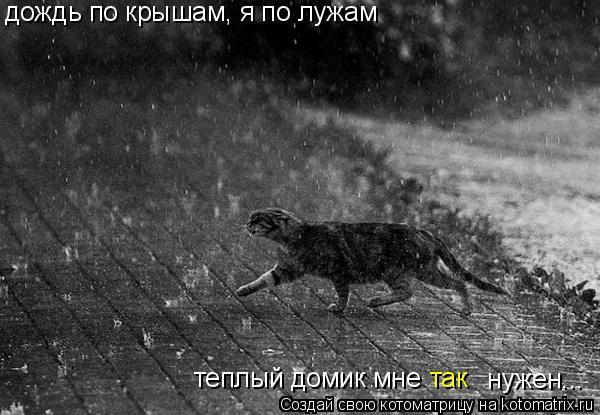 Котоматрица: дождь по крышам, я по лужам теплый домик мне  нужен... так