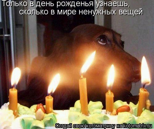 Котоматрица: Только в день рожденья узнаешь, сколько в мире ненужных вещей