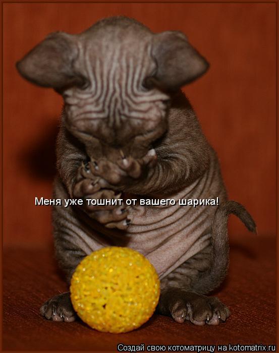 Котоматрица: Mеня уже тошнит от вашего шарика!