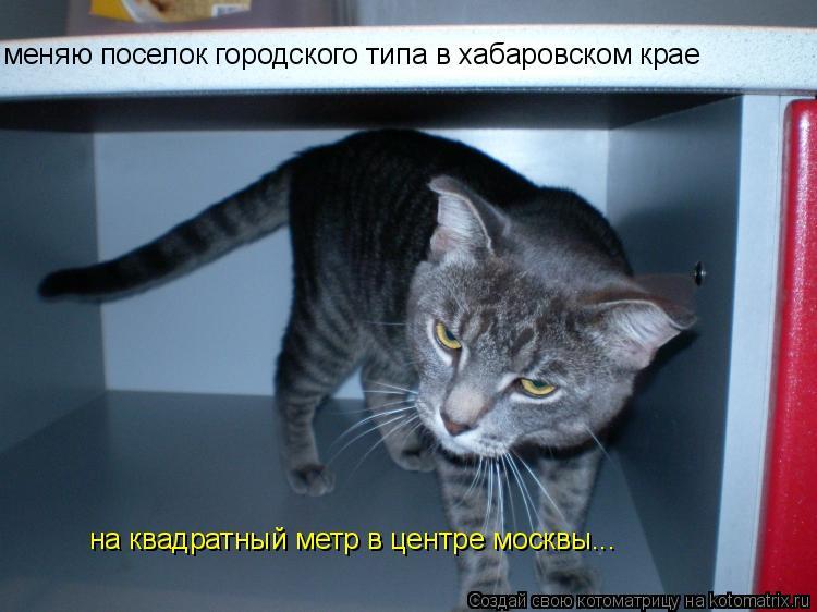 Котоматрица: меняю поселок городского типа в хабаровском крае на квадратный метр в центре москвы...