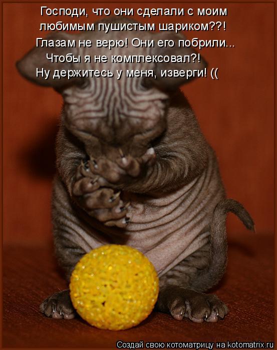 Котоматрица: Господи, что они сделали с моим любимым пушистым шариком??! Глазам не верю! Они его побрили... Чтобы я не комплексовал?! Ну держитесь у меня, из