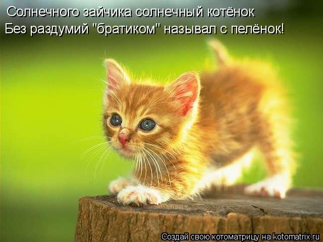 """Котоматрица: Солнечного зайчика солнечный котёнок  Без раздумий """"братиком"""" называл с пелёнок!"""
