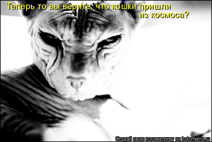 Котоматрица: Теперь то вы верите, что кошки пришли  из космоса?